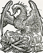 'The Phoenix, a fabulous bird which at the end of life makes a nest which it sets on fire, burns itself to ashes, then comes to life again.  From ''Liber chronicrum mundi'', Nuremberg, 1493.'