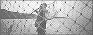 Salmon netter Mike Smith lifts salmon from a 'jumper' net on the sands at St. Cyrus, Aberdeenshire.<br /> Ref. Catching the Tide 05/01/36 (26th June 2001)<br /> <br /> The once-thriving Scottish salmon netting industry fell into decline in the 1970s and 1980s when the numbers of fish caught reduced due to environmental and economic reasons. In 2016, a three-year ban was imposed by the Scottish Government on the advice of scientists to try to boost dwindling stocks which anglers and conservationists blamed on netsmen.