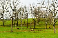 Horse farms along Old Frankfort Pike, Lexington, Kentucky USA