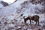 Snow. Matthieu and Mareile Paley trekking with a donkey named Clementine over 5 high passes across the Hindukush, between Pakistan and Afghanistan.