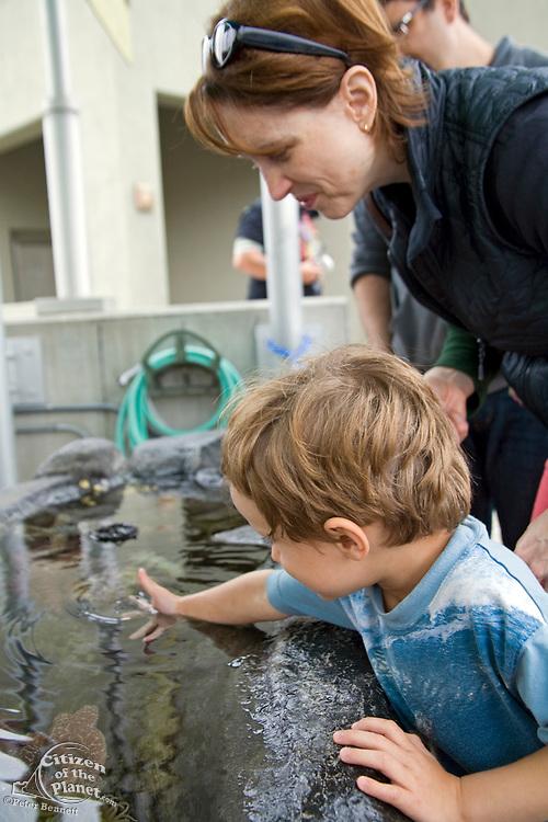 Tide Pool Exhibit, Aquarium of the Pacific, Long Beach, Los Angeles County, California, USA (MR)