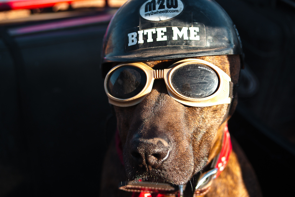 Spirit, an American Pitbull, travels around the United States with his owner, Ara Gureghian, author of TheOasisOfMySoul.com, in the sidecar of a BMW motorcycle