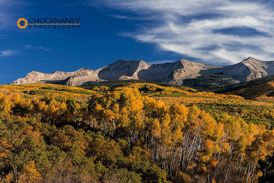 Aspen grove in autumn near Kebler Pass, Colorado, USA