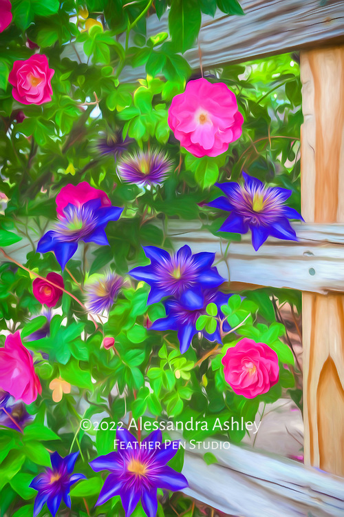 Fuchsia pink climbing roses and blue clematis on wooden trellis.  Painted effects blended with original photograph.