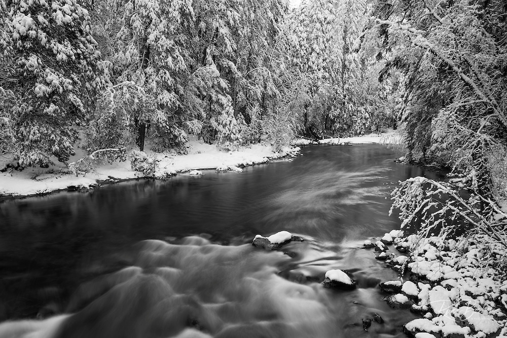 Snowdusted pines along the Merced River, Yosemite National Park, California USA