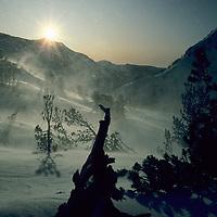 Winter wind, sastrugi snow & whitebark pines near Glen Pass.
