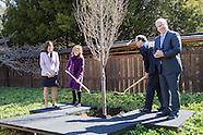 BBG Tree Planting | Japanese Garden
