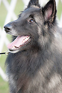 Wine Country Circuit Dog Shows, Finger Lakes, New York