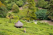 Glendurgan Maze