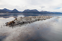 ISLOTES CON CORMORANES Y LEONES MARINOS EN EL CANAL BEAGLE, USHUAIA, PROVINCIA DE TIERRA DEL FUEGO, ARGENTINA (PHOTO BY © MARCO GUOLI - ALL RIGHTS RESERVED. CONTACT THE AUTHOR FOR ANY KIND OF IMAGE REPRODUCTION)