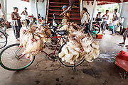 """17 JUNE 2013 - YANGON, MYANMAR:  Trussed up chickens tied to a bicycle on the Yangon-Dala Ferry. The ferry to Dala opposite Yangon on the Yangon River is the main form of transportation across the river. Every day the ferry moves tens of thousands of people across the river. Many working class Burmese live in Dala and work in Yangon. The ferry is also popular with tourists who want to experience the """"real"""" Myanmar. The rides takes about 15 minutes. Burmese pay about the equivalent of .06¢ US for a ticket.  Foreigners pay about the equivalent of about $4.50 US for the same ticket.   PHOTO BY JACK KURTZ"""