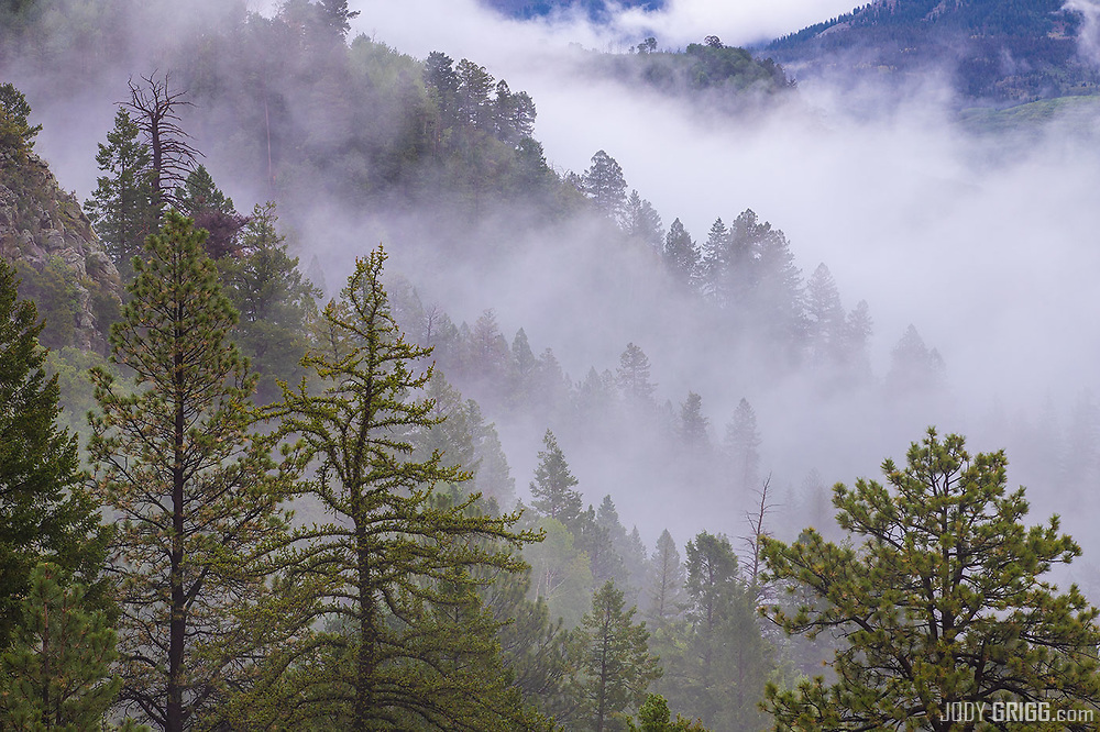 A dreary morning in the West Fork of the Mancos River, San Juan National Forest