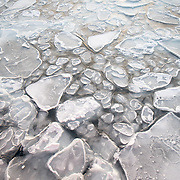 Pancake ice on the waters of the Arctic Ocean.