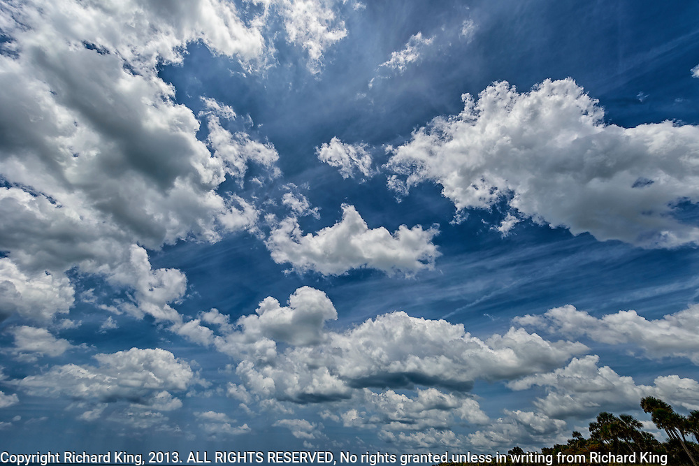 Cloudscape, white puffy clouds, blue sky palm trees