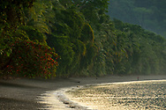 A lone man fishing on the curved, palm-tree-lined coast of Golfo Dulce, Puntarenas, Costa Rica.