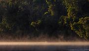 Dense rainforest vegetation along Cristalino River, southern Amazon, Brazil.