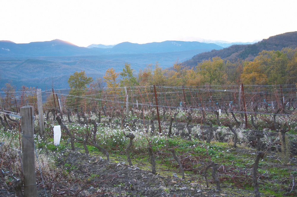 Domaine d'Antugnac. Limoux. Languedoc. Last rays of light a late winter evening. France. Europe. Vineyard. Mountains in the background.
