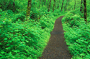 Image of a nature trail in the Columbia River Gorge, Oregon, Pacific Northwest by Randy Wells