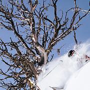 Forrest Jillson skiing powder inbounds at JHMR.