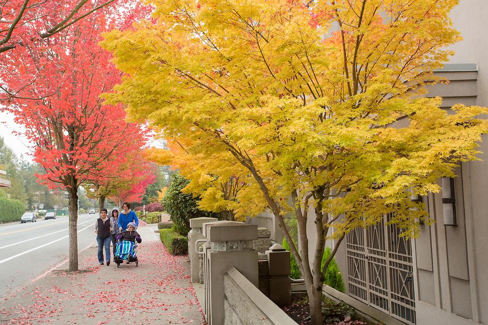 United States, Washington, Kirkland, people walking on sidewalk with wheelchair in fall.