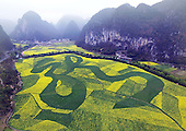 rape flowers in China spell out the word from above