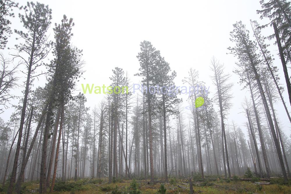 Woods of Solitude