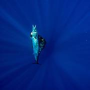 NC Diving