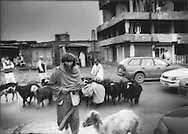 Shepherd leads his flock across Jad-e Maiwand, in center of the capital Kabul, Afghanistan.  Most of Afghanistan is unsuited to agriculture.  So, animal husbandry is important for a stable source of protein.