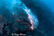 pillow lava erupts from an underwater lava tube at ocean entry of eruption from Kilauea Volcano Hawaii Island ( the Big Island ) Hawaii U.S.A. ( Central Pacific Ocean )
