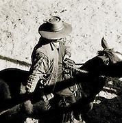 Cattle auction in Temuco, Araucanía Region, Chile