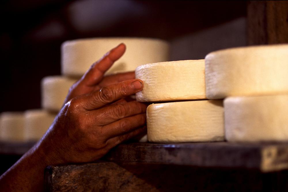 Sao Roque de Minas_MG, Brasil...Producao artesanal de queijo canastra, na regiao da Serra da Canastra. Na foto a maturacao ou  cura do queijo...The handmade production of Canastra cheese, in the Serra da Canastra region. In this photo the cheese maturation...FOTO: JOAO MARCOS ROSA / NITRO