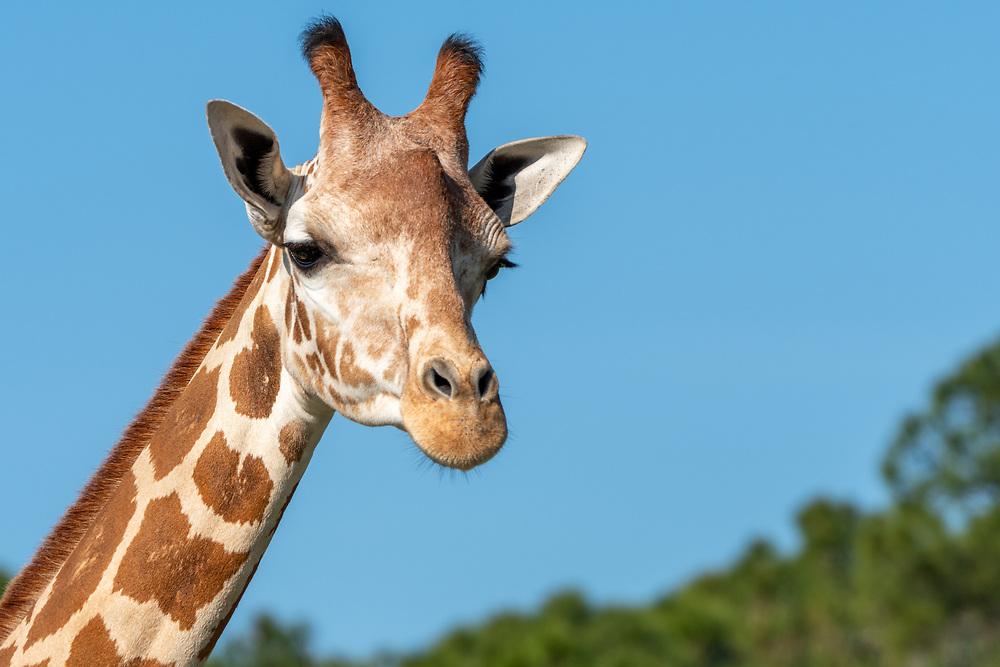 https://Duncan.co/giraffes-of-lion-country-safari