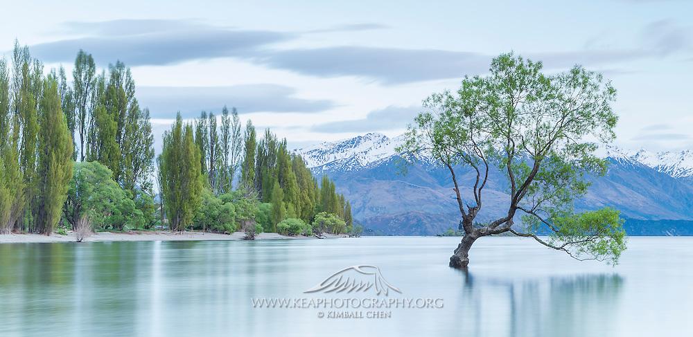 Beautiful green spring on an early morning at Lake Wanaka, New Zealand