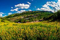 Wildflowers, Mountain View Trail, Snowmass Village, Colorado USA.