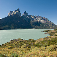 Thorny bushes called mother-in-law's cushion grow beside Lake Nordenskjold, under the Horns of Paine in  Torres del Paine National Park, Chile.