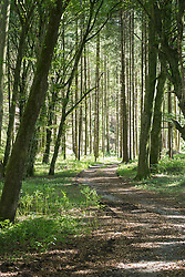 Trail passing through forest, Bavaria, Germany