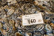 Fresh Folpi - fresh octopus- Venice Rialto Fish Market