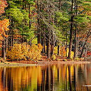 Fall colors in Harold Parker State Forest, Andover, MA