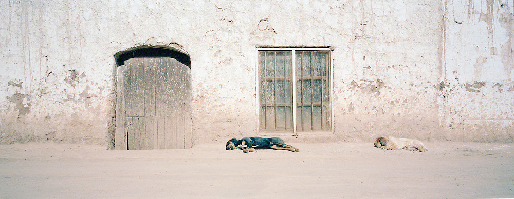 Street dogs sleeping in small market town, Bolivia