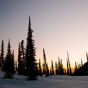 Sunset afterglow through the trees in Glacier National Park.