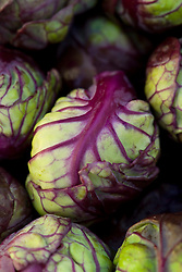 Purple Brussel sprouts - 'Red Rubine'