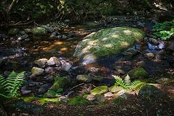 Nature, stock photo