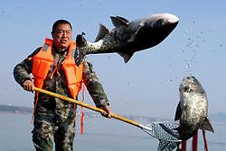 ZHENGZHOU, Jan. 9, 2017 - Zhengzhou, China -  A fisherman harvests fish in the Luhun reservoir in Luoyang City of central China's Henan Province.  (Credit Image: © Xinhua via ZUMA Wire)