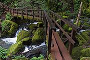 A footbridge on Cataract Creek Trail crosses the stream on Mount Tamalpais Watershed, Marin County Municipal Water District, California, USA.