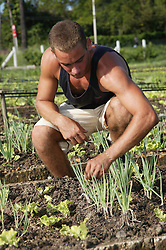 Man working on Organiponico 14 de junio; Pinar del Rio; Cuba,