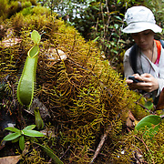 A researcher marks a GPS point for a pitcher plant found along a trail, Gunung Bondang Expedition, Central Kalimantan, Borneo, Indonesia. Run by the Heart of Borneo Rainforest Foundation.