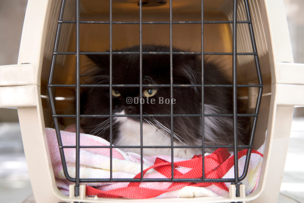a long haired domestic cat in a travel basket