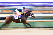 November 1-3, 2018: Breeders' Cup Horse Racing World Championships.