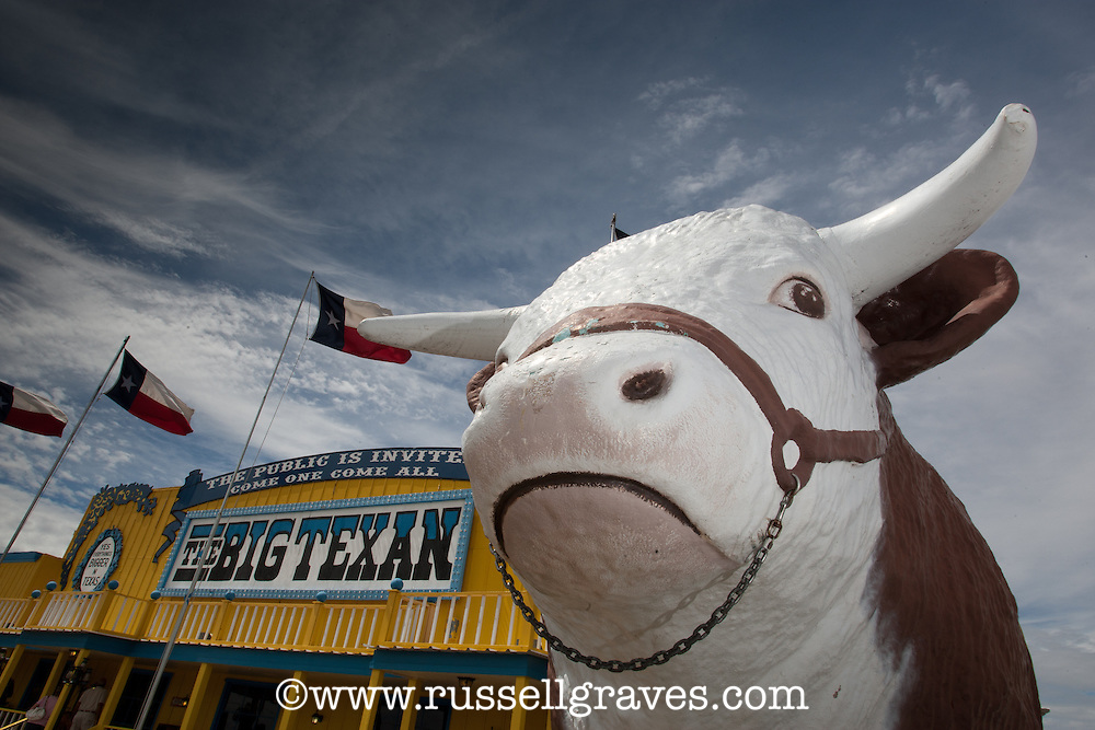 Hereford Statue outside of the Big Texan Restaurant in Amarillo, Texas