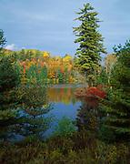 Autumn colors along Deer River Flow, Adirondack Park, Franklin County, New York.